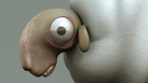 schaap_detail